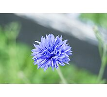 Pretty blue flower Photographic Print