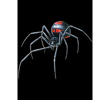 Black Widow Spider Cool Photographic Print