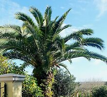 Date Palm beauty by sandysartstudio