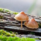 Orange capped fungi by Janette Anderson