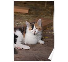 Calico Kitty Poster