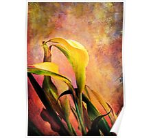 Calla Lilies Original Painting Poster