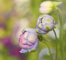Delphinium Day by Marilyn Cornwell