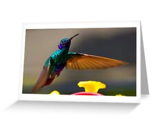 Tom Thumb Is A Sparkling Violetear Greeting Card