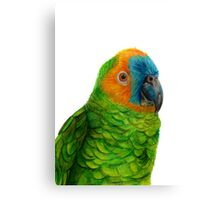 Brazilian Parrot Canvas Print