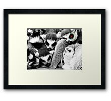 One Eye Open Lemur Framed Print