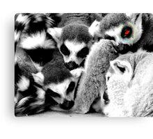 One Eye Open Lemur Canvas Print