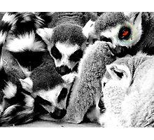 One Eye Open Lemur Photographic Print