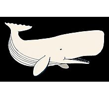 White Sperm Whale Photographic Print