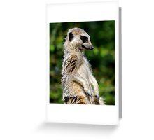 Bemused Meerkat Greeting Card