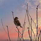 """""""Not a sparrow falls unknown to God's eye."""" by Nancy Richard"""