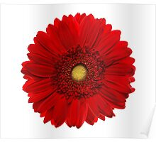 Red gerbera head, closeup shot, isolated on a white background Poster