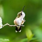 Hummingbird Flexibility by Christina Rollo