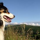 A View for a Collie. by Michael Haslam