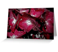 red african violets Greeting Card