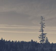 Santiam State Forest by Eric Muhr