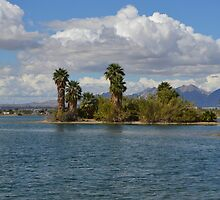 palm trees, trees, Arizona, Lake Havasu City, blue, green, clouds by RenieRutten