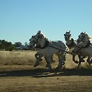 Pulling The Stagecoach_Longreach_Queensland_Australia by Kay Cunningham