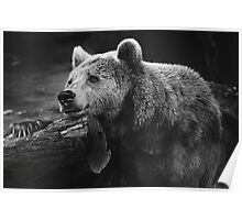 bear, black and white Poster