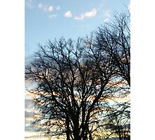 Branches at sunset Photographic Print