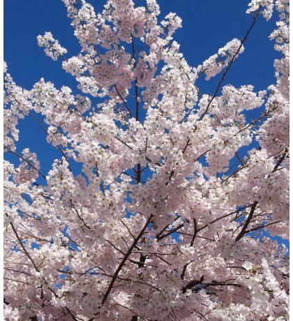 Plum Blossoms Against the Sky Sticker