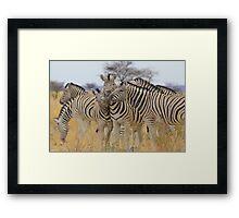 Zebra - African Wildlife Background - Love to Feel Framed Print