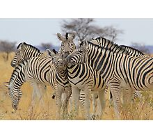 Zebra - African Wildlife Background - Love to Feel Photographic Print