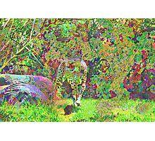 Plasma Cat Photographic Print