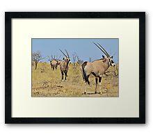 Oryx - African Wildlife - Gemsbok Line of Horns Framed Print