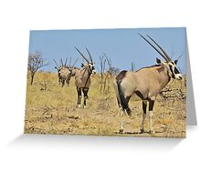 Oryx - African Wildlife - Gemsbok Line of Horns Greeting Card