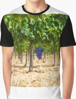 Red grapes at Saint Tropez vineyard, France Graphic T-Shirt