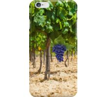 Red grapes at Saint Tropez vineyard, France iPhone Case/Skin