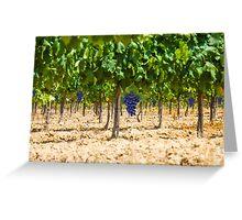 Red grapes at Saint Tropez vineyard, France Greeting Card