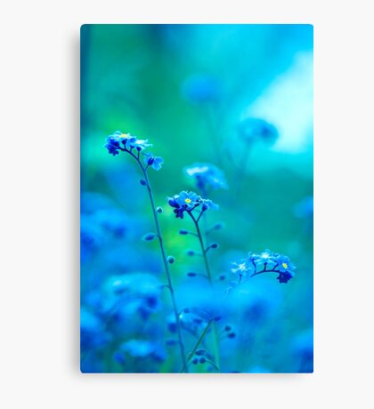 Daydream In Blue Canvas Print