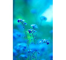 Daydream In Blue Photographic Print