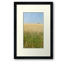 Endless fields of wheat Framed Print
