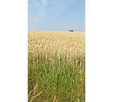 Endless fields of wheat Photographic Print