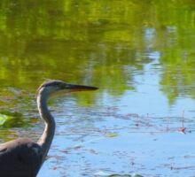 Heron in a lake Sticker
