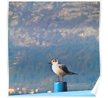 Seagull at pier Poster