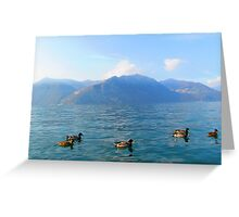 Ducks on a lake in the mountains Greeting Card