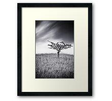 Blackthorns Framed Print