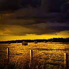 THE FIELD OF GOLD by leonie7