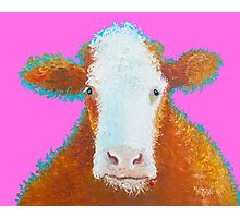 Hereford Cow on pink Photographic Print