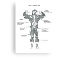 Muscle Diagram (Back View) Canvas Print