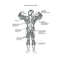 Muscle Diagram (Back View) Photographic Print