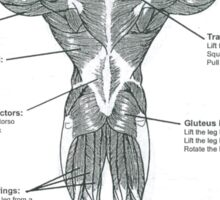 Muscle Diagram (Back View) Sticker