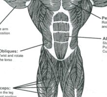 Muscle Diagram (Front View) Sticker