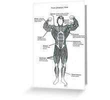 Muscle Diagram (Front View) Greeting Card