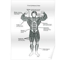 Muscle Diagram (Front View) Poster