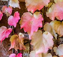 Autumn Leaves - Uralla NSW Australia by Beth  Wode